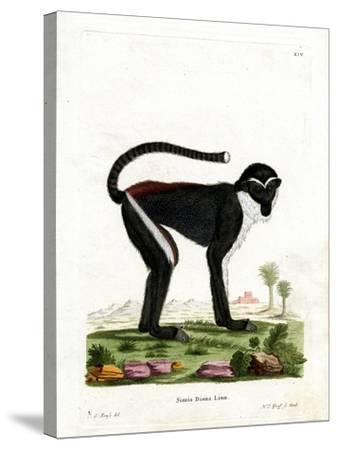 Diana Monkey--Stretched Canvas Print