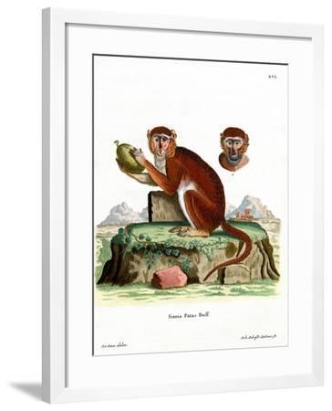 Patas Monkey--Framed Giclee Print