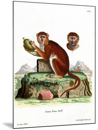 Patas Monkey--Mounted Giclee Print