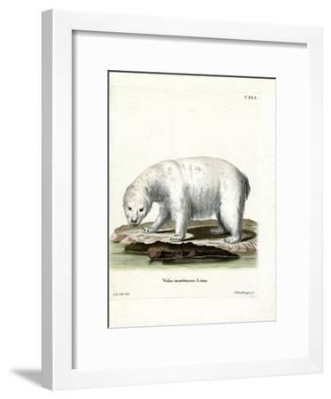 Polar Bear--Framed Giclee Print