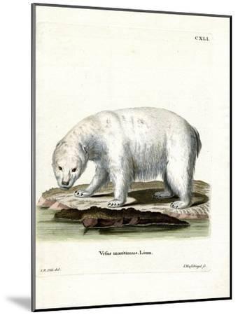 Polar Bear--Mounted Giclee Print