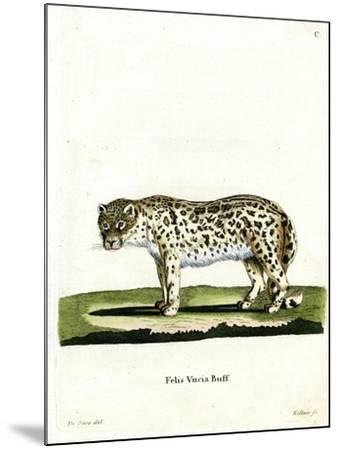 Snow Leopard--Mounted Giclee Print