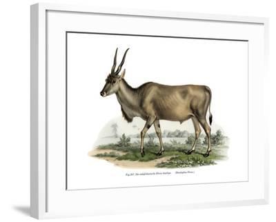 Eland, 1860--Framed Giclee Print