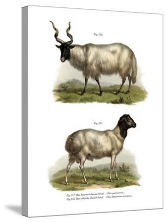 Sheep, 1860--Stretched Canvas Print