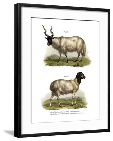 Sheep, 1860--Framed Giclee Print