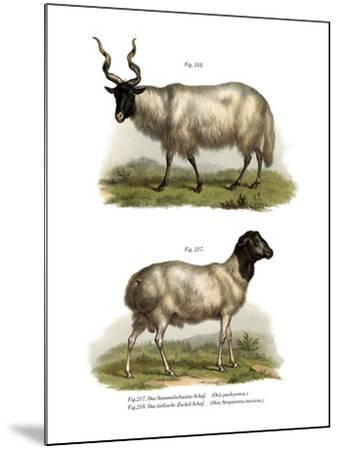 Sheep, 1860--Mounted Giclee Print