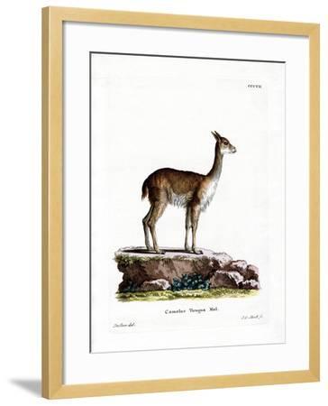 Vicugna--Framed Giclee Print