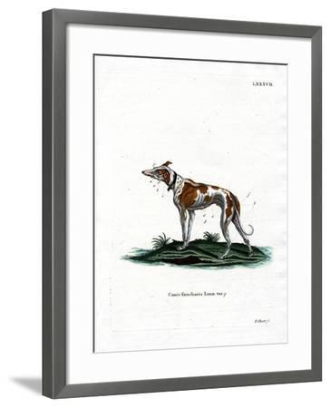 Domestic Dog--Framed Giclee Print