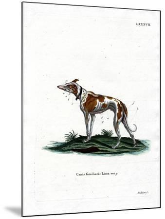 Domestic Dog--Mounted Giclee Print