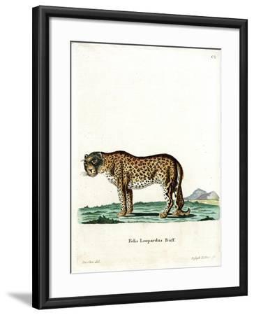 Leopard--Framed Giclee Print