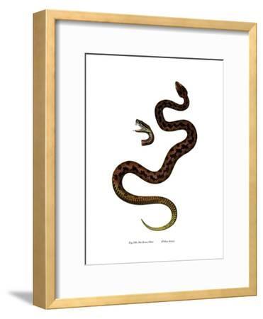 Adder--Framed Giclee Print