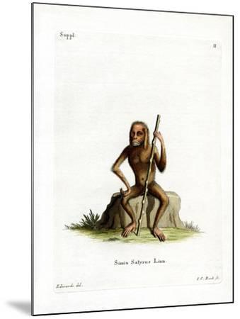 Orang-Outang--Mounted Giclee Print