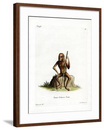 Orang-Outang--Framed Giclee Print