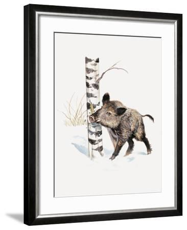 Close-Up of a Wild Boar Rubbing His Neck on a Tree Trunk (Sus Scrofa)--Framed Giclee Print