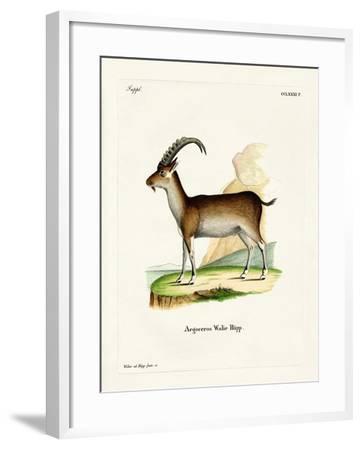 Walia Ibex--Framed Giclee Print