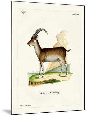 Walia Ibex--Mounted Giclee Print