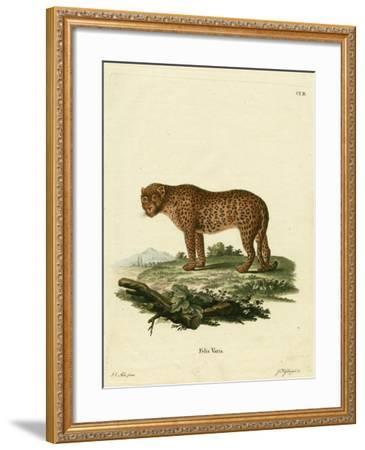 Panther--Framed Giclee Print