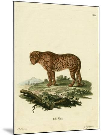 Panther--Mounted Giclee Print