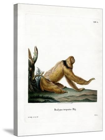 Maned Sloth--Stretched Canvas Print