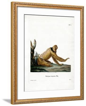 Maned Sloth--Framed Giclee Print