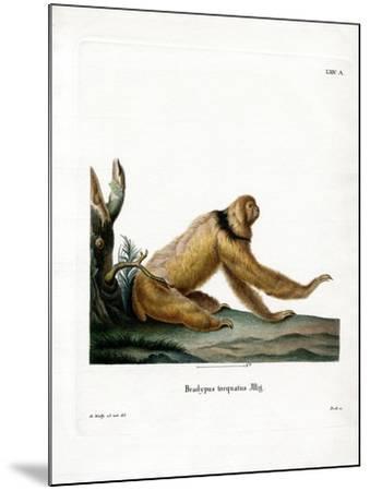 Maned Sloth--Mounted Giclee Print