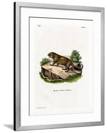 Porcupine--Framed Giclee Print