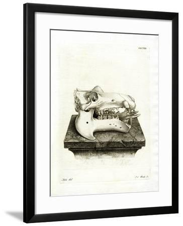 Hippo Skull--Framed Giclee Print