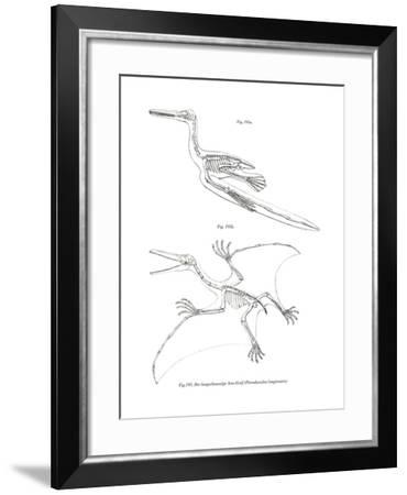 Pterodactyl--Framed Giclee Print