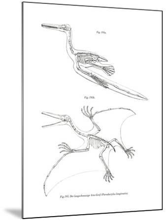 Pterodactyl--Mounted Giclee Print