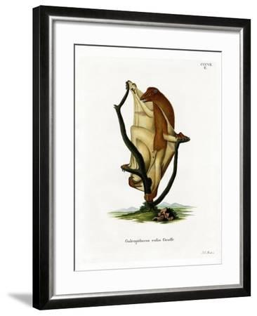 Flying Lemur--Framed Giclee Print