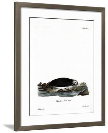 Sea Otter--Framed Giclee Print