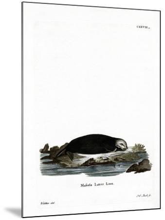 Sea Otter--Mounted Giclee Print