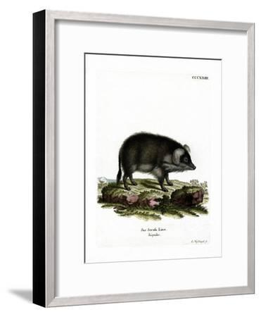 Wild Boar--Framed Giclee Print