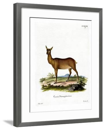 Wapiti--Framed Giclee Print