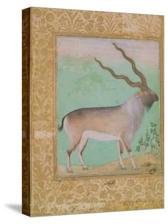 Ibex, Mughal--Stretched Canvas Print