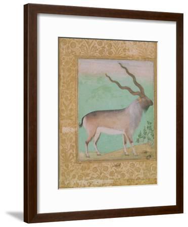 Ibex, Mughal--Framed Giclee Print