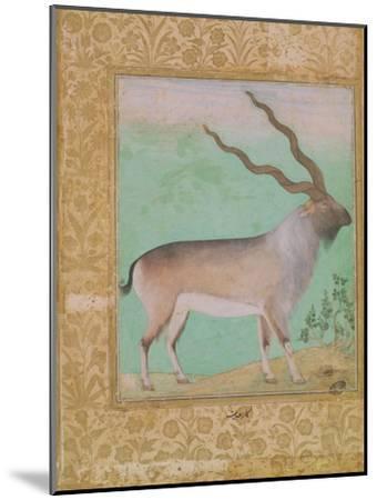 Ibex, Mughal--Mounted Giclee Print