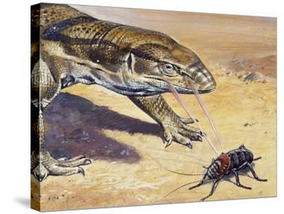 Whistle Cricket (Eugaster Spinulosa), Tettigoniidae, Drawing--Stretched Canvas Print