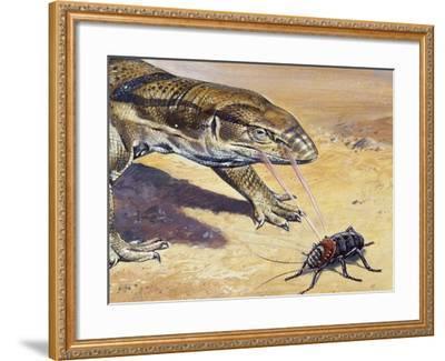 Whistle Cricket (Eugaster Spinulosa), Tettigoniidae, Drawing--Framed Giclee Print