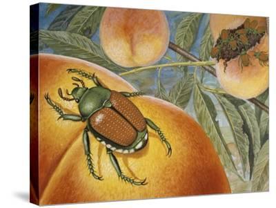 Japanese Beetle (Popillia Japonica), Scarabeidae--Stretched Canvas Print