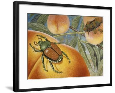 Japanese Beetle (Popillia Japonica), Scarabeidae--Framed Giclee Print