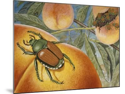 Japanese Beetle (Popillia Japonica), Scarabeidae--Mounted Giclee Print