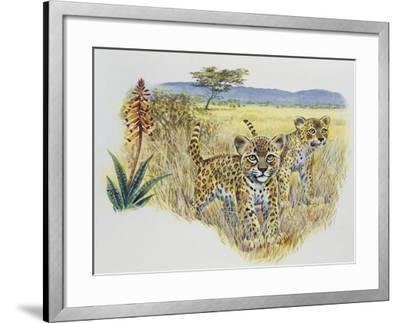 Leopard Cubs (Panthera Pardus), Felidae, Drawing--Framed Giclee Print