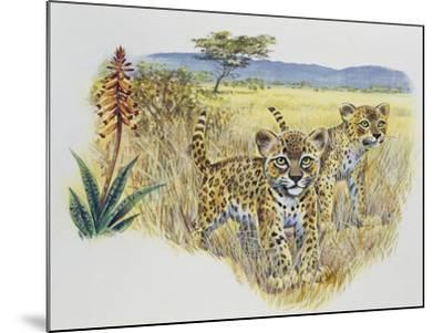 Leopard Cubs (Panthera Pardus), Felidae, Drawing--Mounted Giclee Print