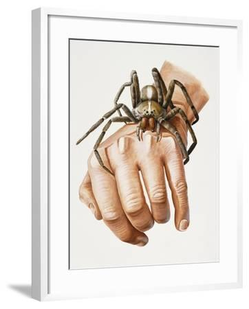 Spider on Hand, Ctenidae, Artwork by Mike Taylor--Framed Giclee Print