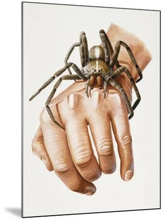 Spider on Hand, Ctenidae, Artwork by Mike Taylor--Mounted Giclee Print