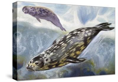 Weddell Seal (Leptonychotes Weddellii), Phocidae--Stretched Canvas Print