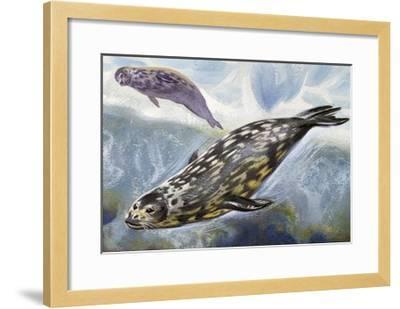 Weddell Seal (Leptonychotes Weddellii), Phocidae--Framed Giclee Print