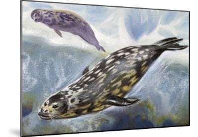 Weddell Seal (Leptonychotes Weddellii), Phocidae--Mounted Giclee Print