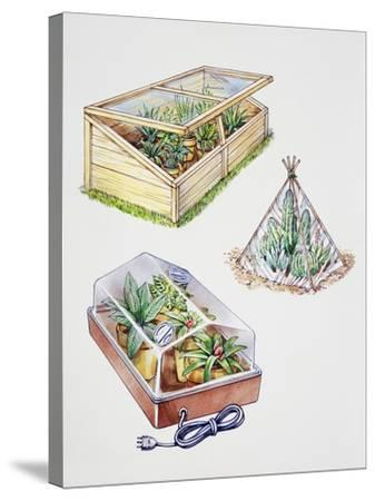 Greenhouse, Plastic Covering for Plants and Plant Propagation Box--Stretched Canvas Print